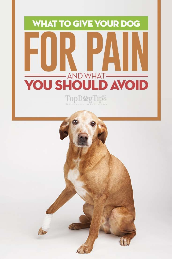 """What Can I Give My Dog For Pain and What To Avoid? You have been noticing that your dog has been limping a bit and suspect that it could be arthritis setting in. You are worried that your dog is in pain as he eases his way into his bed and grunts as he gets up slowly. Now, you find yourself asking, """"What can I give my dog for pain?"""" #dogs #pain #management #nsaid #pets #dog #canines #dangers #hazards #medicine #overthecounter #health"""