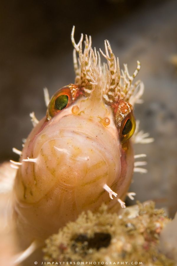 1282 best images about under the sea on pinterest for Brackish water fish