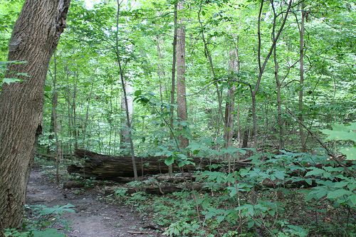 One of the best places to go backpacking near Chicago is the Forest Glen Preserve in central Illinois, which has a lengthy hiking trail, forested campsites.