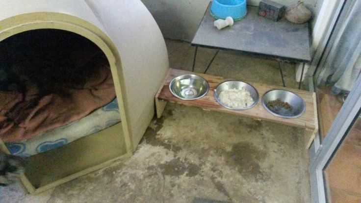 Tripple Dog Bowl Diy No Spill Dog Feeding Solution Dog