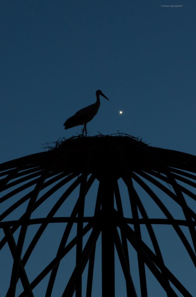 Night photo of a stork on its nest http://mpimpao.com