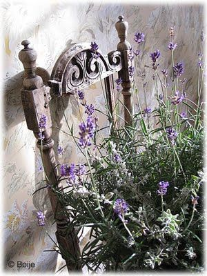 pretty chair with lavender in old bucket: Secret Gardens, Lavender Garden, Plants Stands, Chairs Planters, Beautiful Lavender, The Secret Garden, Lavender Plants, Vintage Beautiful, Old Chairs