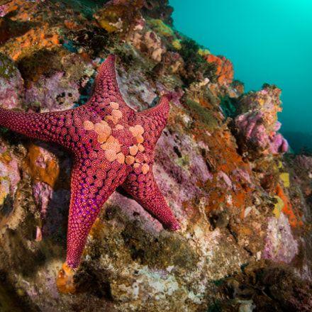 scuba - underwater #scuba #snorkeling #diving #reefs #underwater