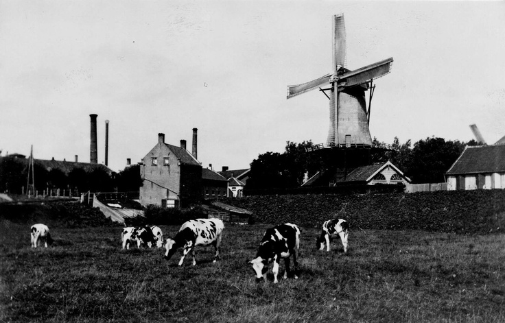 "Windmill ""De Vlasbloem"" on Straatweg and Weeskinderendijk, 1895"