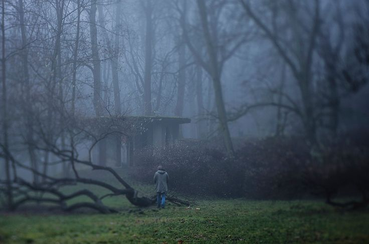 Silence in the fog   #lensbaby #edge80 #fog #misty
