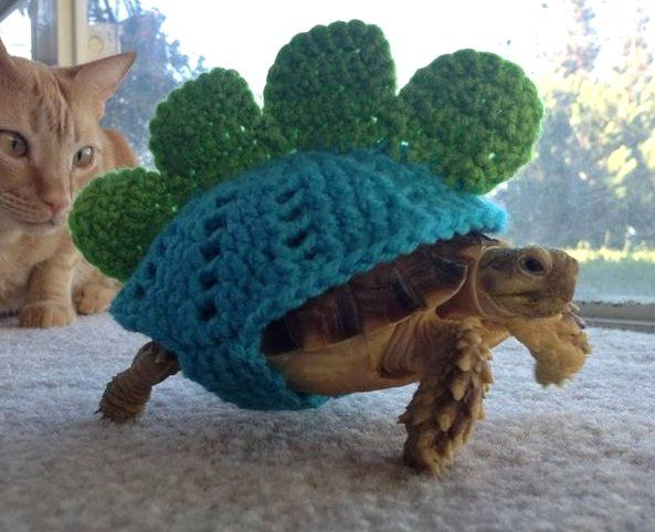 Lifeisgood - Animals in sweaters and your daily dose of awwww - Home Thumbnail With Horizontal Story