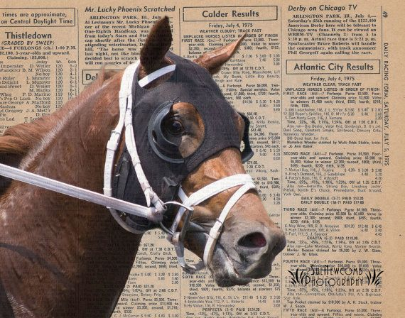 Horse Racing by SueNewcombPhotos on Etsy