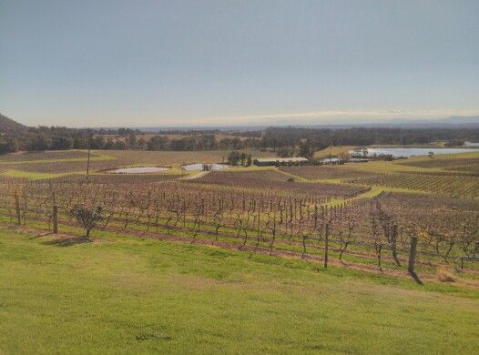 The hunter valley wine gardens!