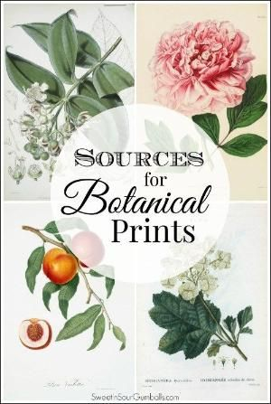 Sources for Botanical Prints by johanna