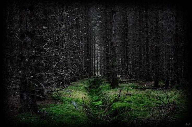 Foto: AK Stensland, skog i Audnedal kommune, Norge