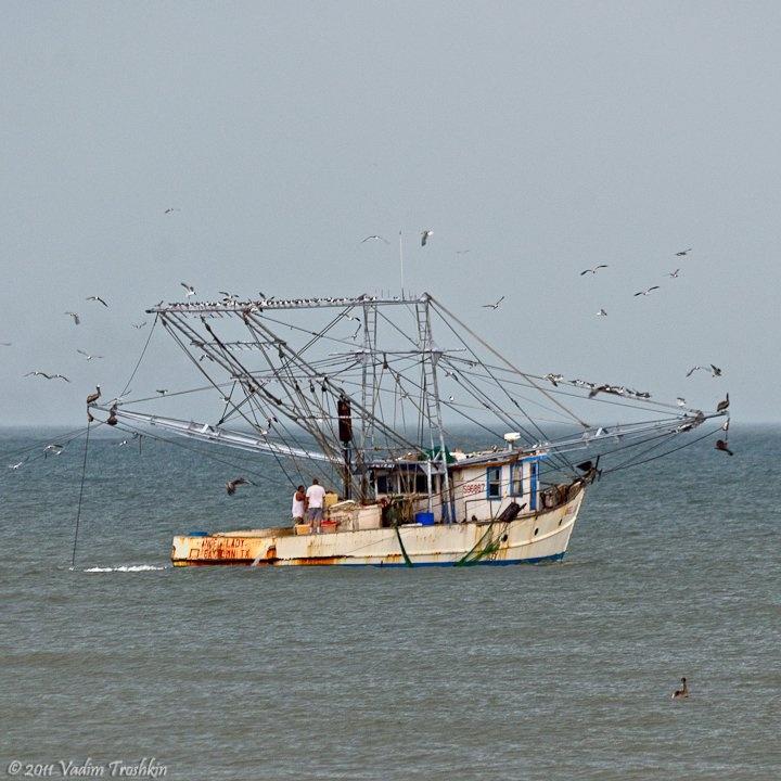 363 best shrimpin images on pinterest for Best fishing spots in galveston