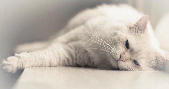 Maakt jouw kat jou 's ochtends vroeg wakker? In dit artikel geef ik tips hoe je ervoor kan zorgen dat jouw kat jou 's ochtends vroeg niet meer wakker maakt.