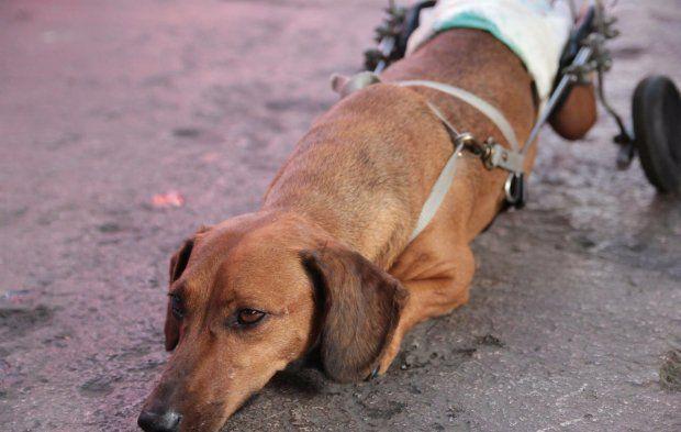 Feira incentiva a adoção e promove a conscientização de que um animal com deficiência é como todos os outros.