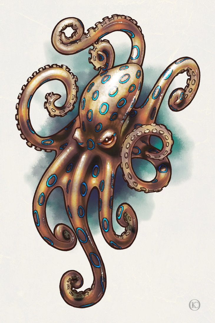pretty octopus tattoo blue ringed octopus by skitterbot projects to try pinterest. Black Bedroom Furniture Sets. Home Design Ideas