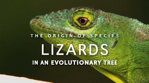 This video from HHMI shows terrific examples of speciation and adaptations.  I'm definitely using this in my evolution unit.
