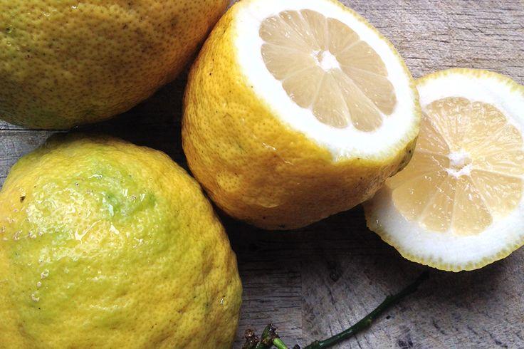 Limoni. Lemon