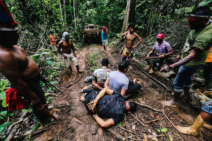 Armados com arcos e flechas, espadas, rifeis e agora também com GPS e câmeras, a tribo Ka'apor se recusa perder suas terras para madeireiros ilegais. Deixados apenas com promessas vazias do g…