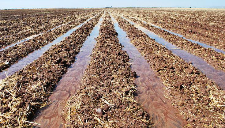 Reversing agricultural land degradation worldwide | Dryland Systems
