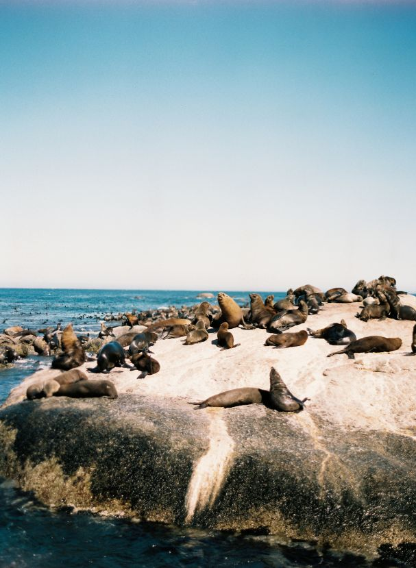 Seal Rock | South Africa | Cape Point | Jen Huang  Been there-it's amazing!!!