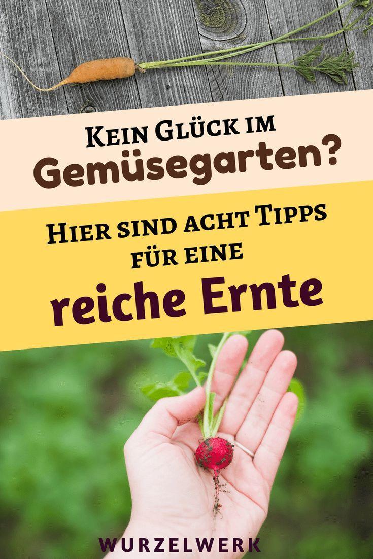 Kleiner Garten, große Ernte! 8 Tipps für einen produktiven (Mini)Garten