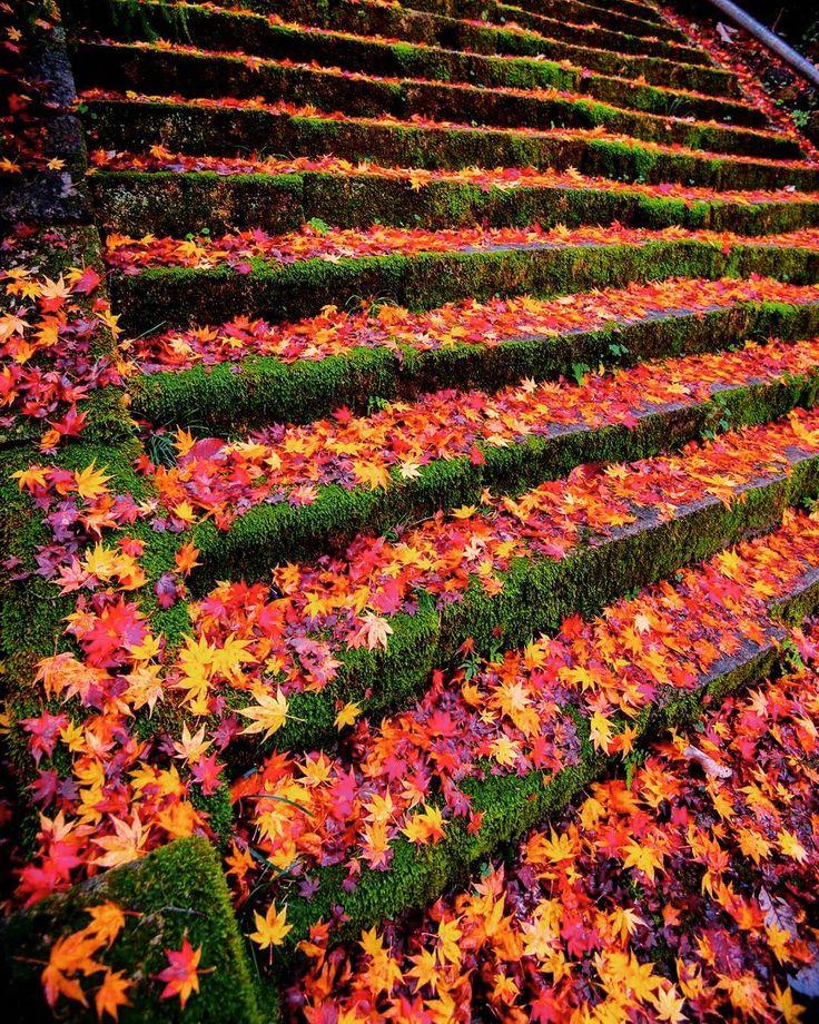 京都 金蔵寺2 雨上がりの朝の参道は、カラフルカーペット 紅葉の名所としても人気です。 東山に比べると、人も少ないのですが、ここまでの(山の)一歩道は、車ですれ違うのもやっとの感じです。健脚で歩いて登って来られるご年配の方を見かけます 📷2016年11月 奈良時代創建の天台宗のお寺。 応仁の乱で焼け、徳川綱吉公のお母様の桂昌院さんにより再建されました。 ✨✨✨ Konzo-ji Temple in Kyoto This shot was taken last November. This temple was founded in the Nara Period(the 8th Century). Burned in battle of Onin, the temple buildings were rebuilt in the 17th century by Keishoin, who was the mother of Tokugawa Tsunayoshi, the 5th shogun of Tokugawa shogunate. Konzo-ji belong...