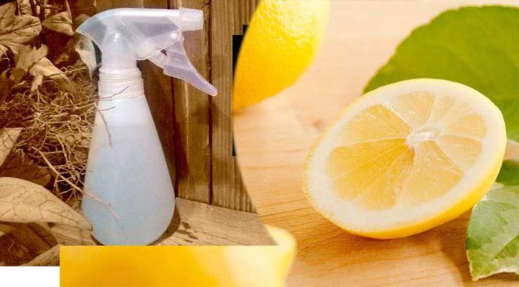 DIY: Φτιάξτε Μόνοι σας Φυσικό Αρωματικό Χώρου με Λεμόνι