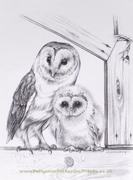 Barn Owl and Chick by Pollyanna Pickering