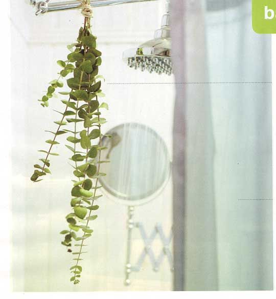 I keep meaning to try this...eucalyptus bunch hung in the shower for steam activated aromatherapy. Looks pretty, too!