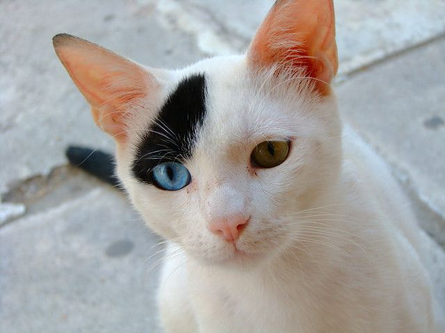 My Sophie had these eyes with 2 black spots on her head.