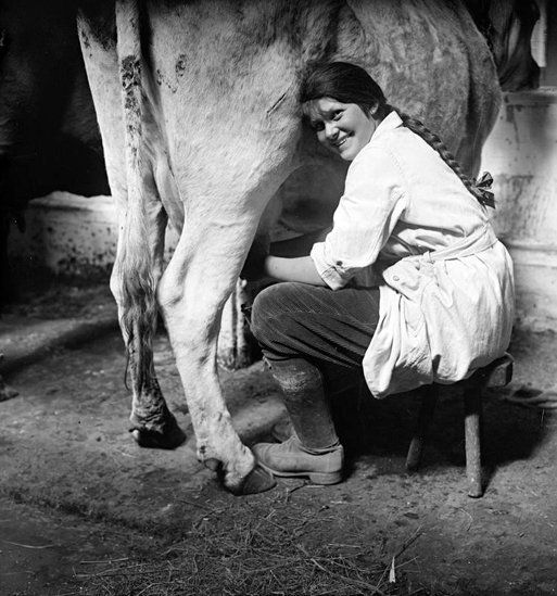 A member of the Women's Land Army milking a cow.