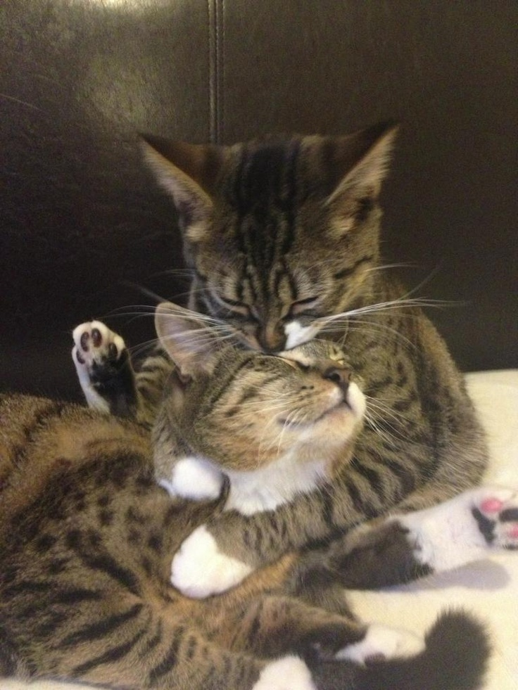 Loki holding Thor around the neck and cleaning his head while Thor falls asleep. - Imgur