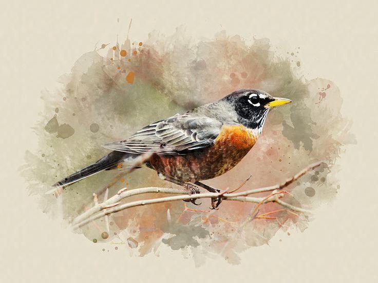 American Robin Watercolor Art, Robin Wall Art, Bird Prints, Fine Art, Watercolor Painting, American Robin, Bird Art Print, Wildlife Print by ChristinaRolloArt on Etsy