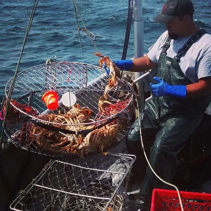 queensparrow78 Commercial crabbing (Dungeness) #westcoast #crabtraps #hellyhansen #coldpacific #lemonbutter