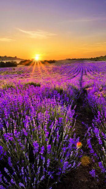 Mor çiçekler ve Gün batımı .......