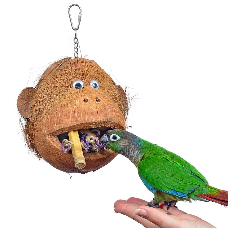 Pet Bird Toys : Images about holiday gift ideas for your pet bird on