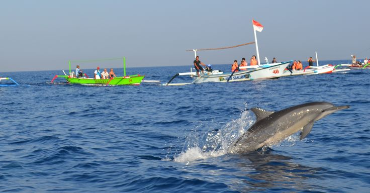THE LOVINA-BALI is famous with its dolphin. Stay with us and see the dolphin with special rate at USD 15 net/person. They will jump in front of you while the sun is rising :) Book now or call us for more information at +62 362 3435 800