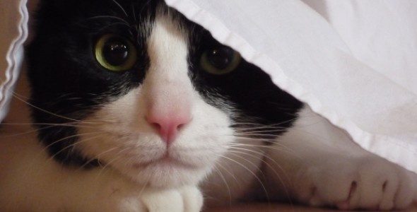 Feline Anxiety — health article from the Cat Health Support Group on the Smart Living Network.