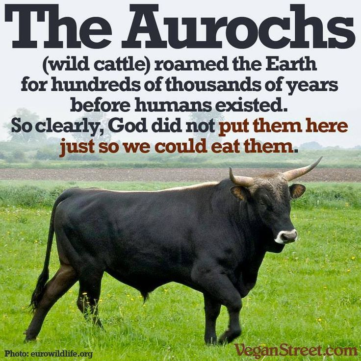 God did NOT put animals on Earth for humans. The Aurochs (wild cattle) roamed the Earth for hundreds of thousands of years before humans existed.