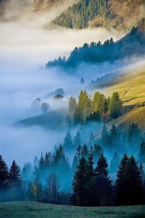 #GoAltaCA   Bolinas Ridge – Marin County