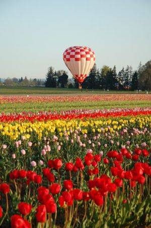 the Woodburn Tulip Festival Oregon