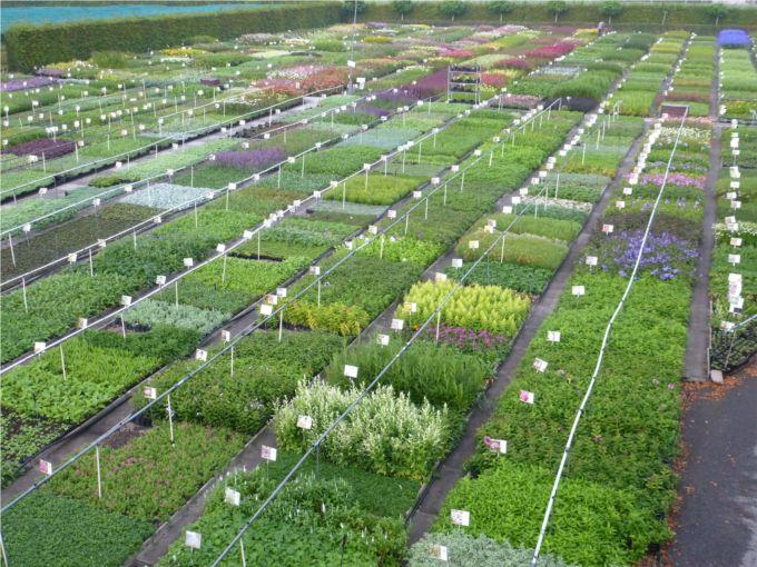 Vaste plantenkwekerij Guido Van de Steen, groothandel in planten.