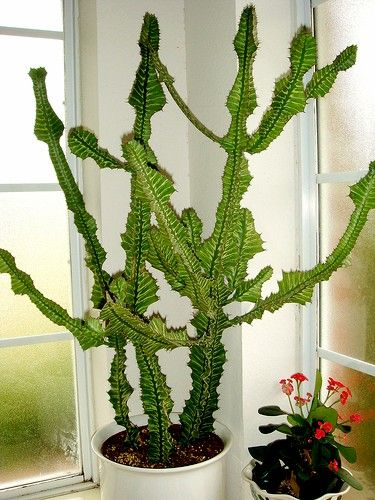 indoor Houseplants | Cactus House Plants