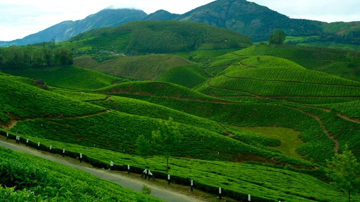 9 Nights & 10 Days Holiday Packages. Destinations:	 Marari , Athirapally , Thekkady , Munnar , Kumarakom ,  Cochin , Alappuzha Houseboat