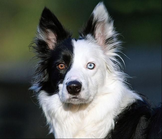 animais-olhos-diferentes-9                                                                                                                                                                                 Mais