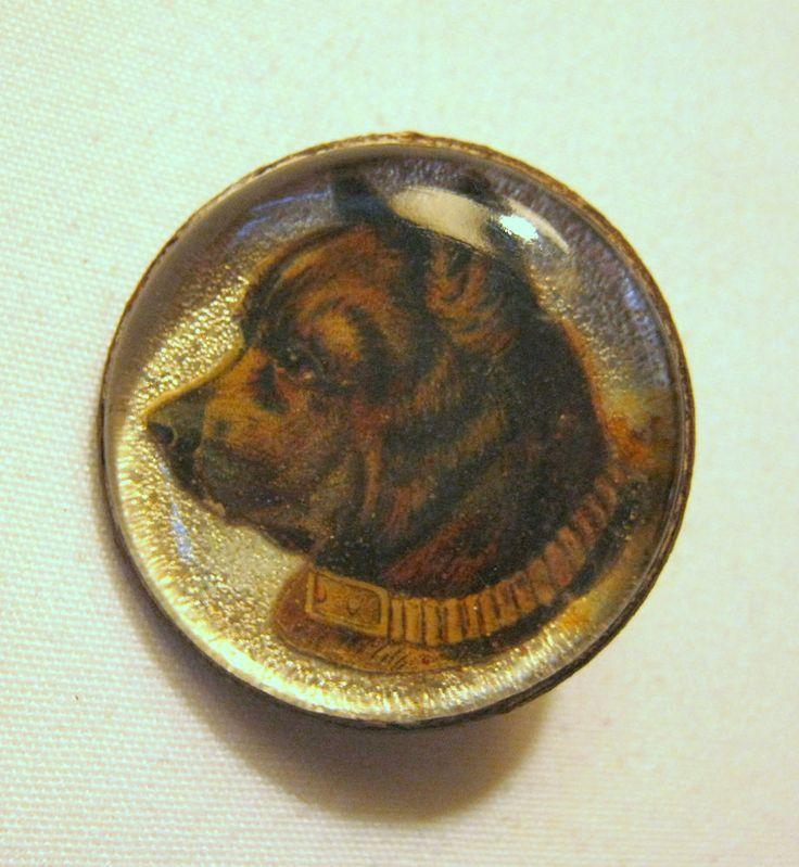 Old HORSE Neapolitan Mastiff Dog Picture BRIDLE ROSETTE ...