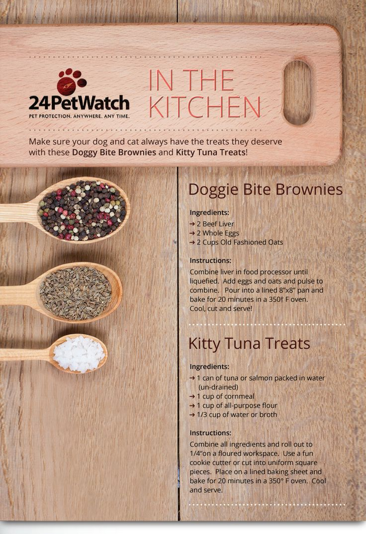 Dog and cat treats to make at home, neat. 24PetWatch Newsletter Winter 2014 Edition