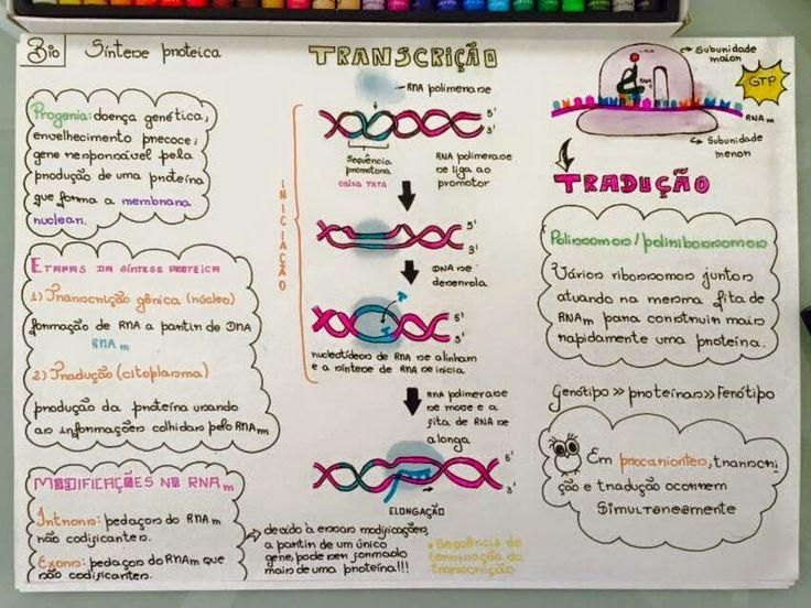 EU ESCOLHI ESTUDAR: GENÉTICA - TRANSCRIÇÃO
