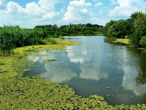 Lake Tisza, wildlife wonderland