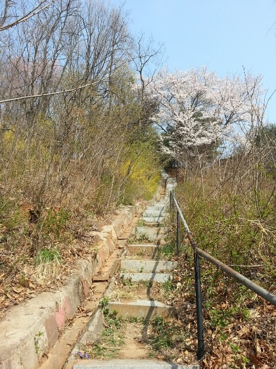 Spring stairs