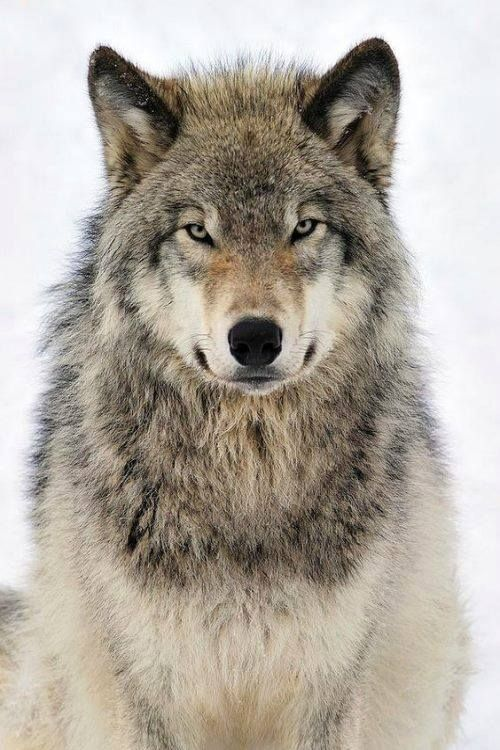 *We all have a Wolf Inside* by M.O.d.A
